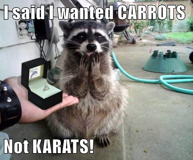 animals diamonds raccoons funny animals