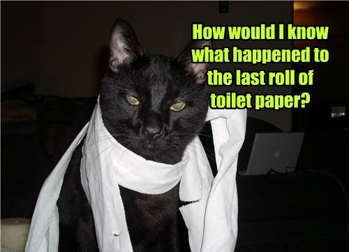 toilet paper,caption,Cats,funny,black cat,shredding
