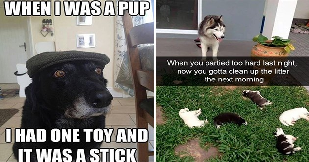 doggo memes of dogs
