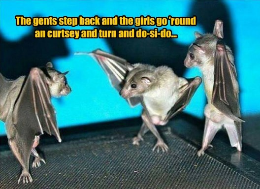 dancing bats funny animals - 8578327808
