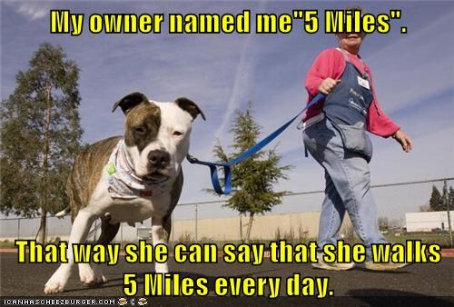 five,dogs,owner,walks,miles,caption