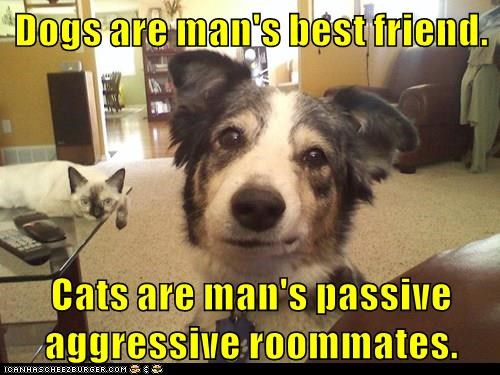 dogs,best friends,caption,roommates,passive aggressive,Cats