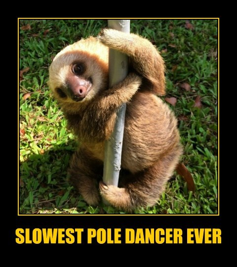 pole dancing funny animals sloth - 8578519552