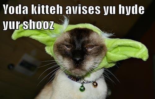 Yoda kitteh avises yu hyde yur shooz