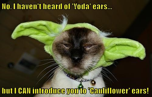No, I haven't heard of 'Yoda' ears...  but I CAN introduce you to 'Cauliflower' ears!
