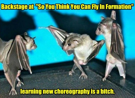 bats funny animals Dancing With The Stars - 8578831872