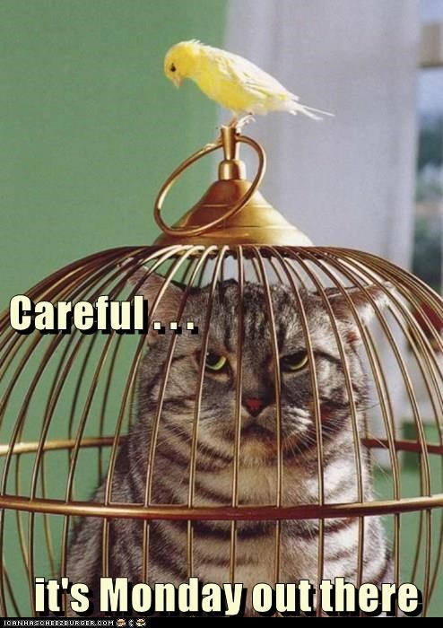 birds,stuck,if i fits i sits,birdcage,mondays,caption,Cats,funny