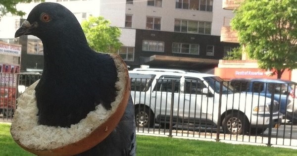 Spirit Animal of The Day: Pigeon Wears Crusty Bagel, Rocks New York Fashion World