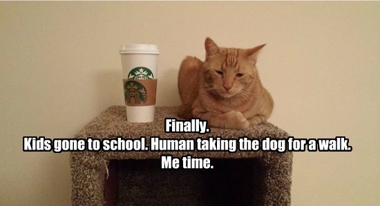 Finally.  Kids gone to school. Human taking the dog for a walk. Me time.
