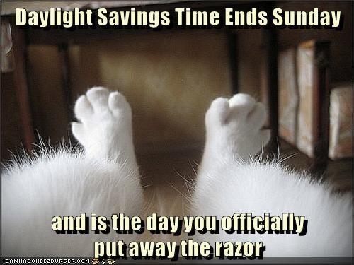 animals Cats caption hairy daylight savings funny - 8579398144