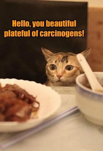 cat bacon beautiful caption carcinogen - 8579439360