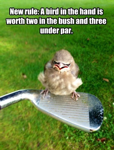 golf birds idiom funny animals - 8579446784