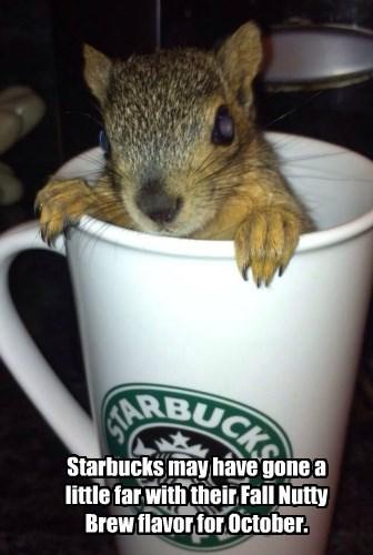 Starbuc