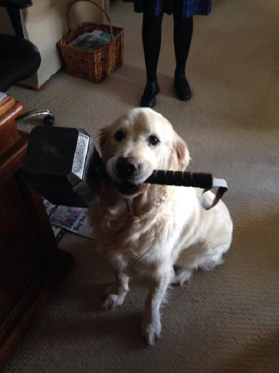 dogs thor superheroes Very Few Are Worthy