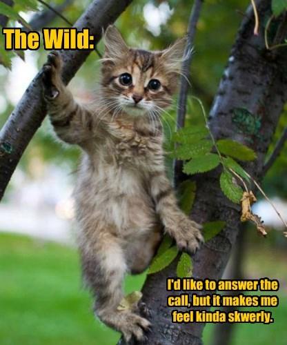 The Wild:
