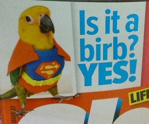 costume birds halloween - 8579501568