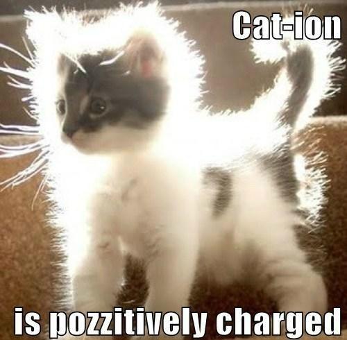 Look! A Positive Cat!
