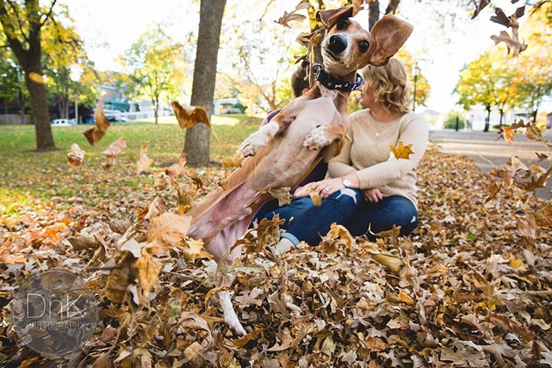 funny dogs image Dog is Living His Best Life While Photobombing His Owner's Engagement Photos and Playing in Leaves