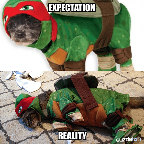 funny cats halloween Pet Costumes Don't Always Work Out Like You Hope They Do