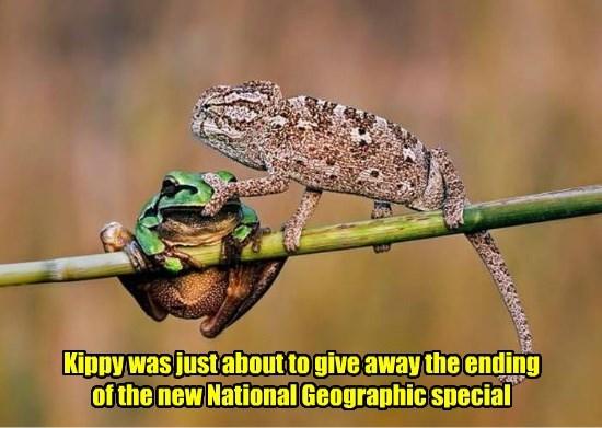 Lizards hate spoilers