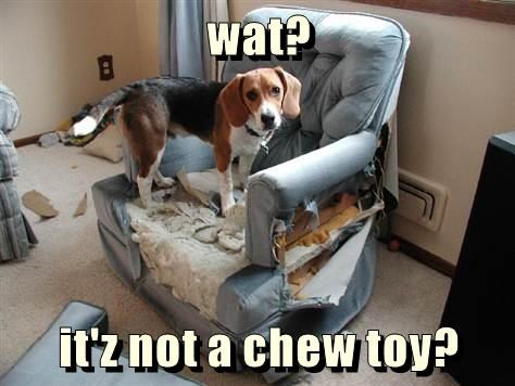 chair,caption,dogs,chew toy