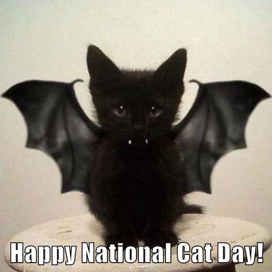 Happy National Cat Day!