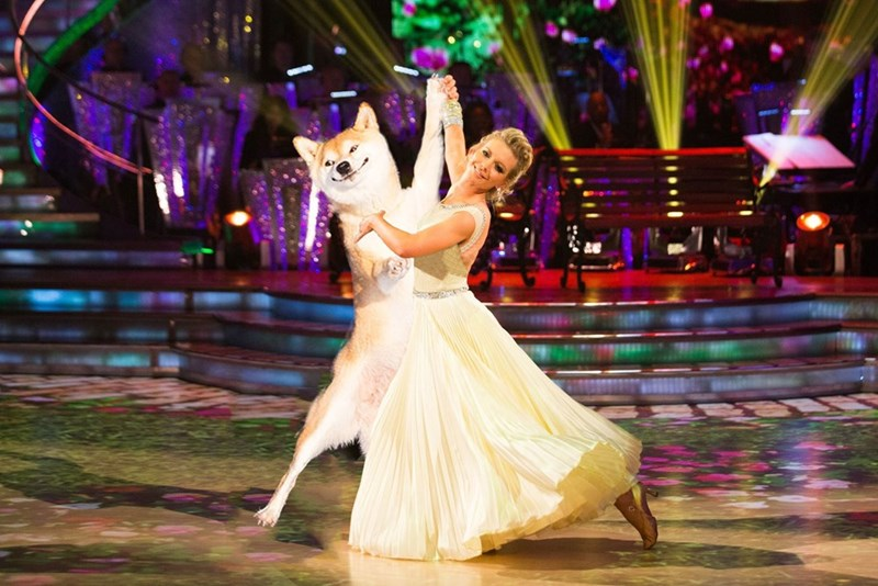 dogs photoshop battle This Dog Is About to Win Dancing With the Stars