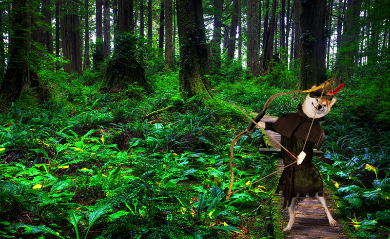 dogs photoshop battles Robin Hood: Doge in Tights