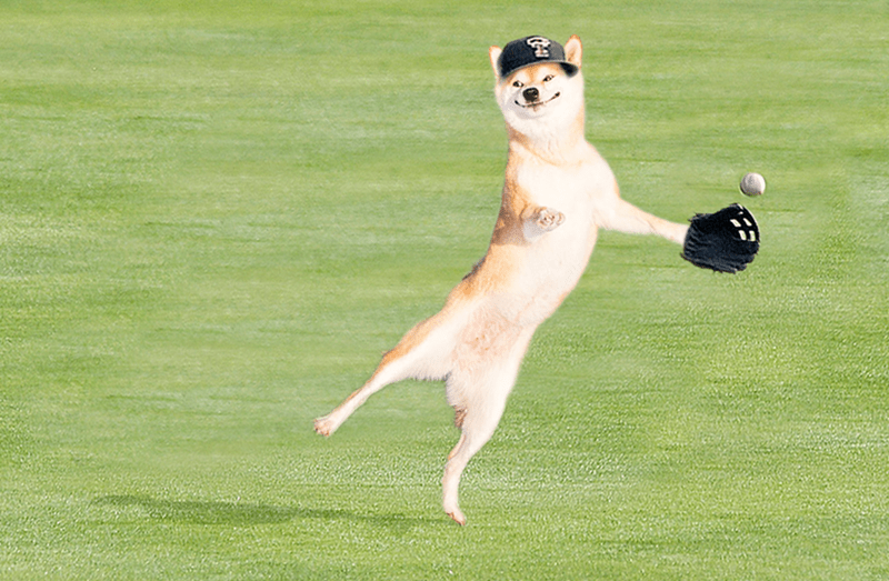 dogs photoshop He's Really Good at Catch