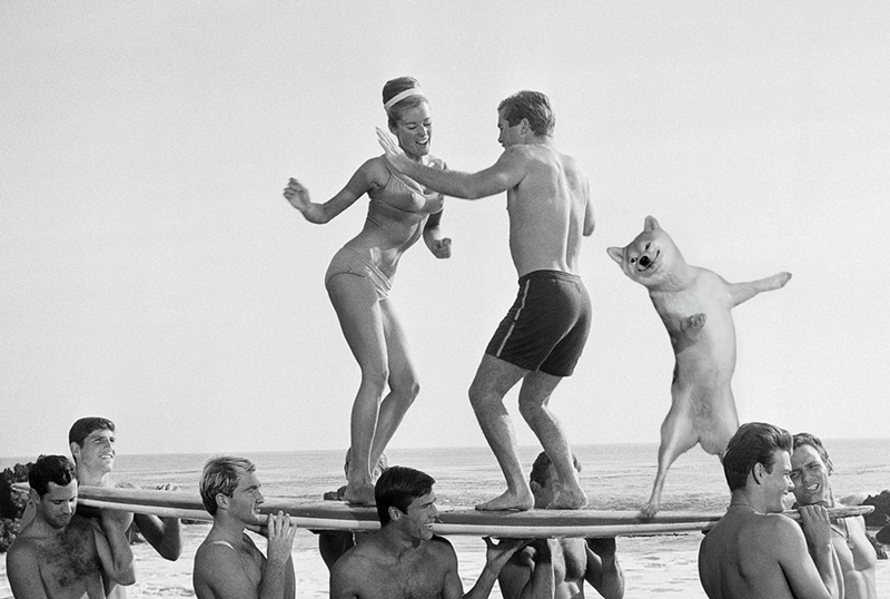 dogs photoshop Who Doesn't Like to Spend the Day Doing the Twist at a Beach Party