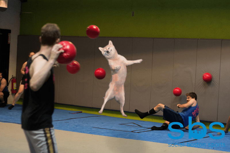 dogs photoshop And He's a Professional Doge-Ball Champion