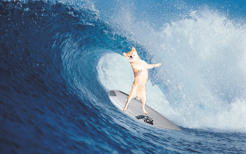 dogs photoshop he surfs too