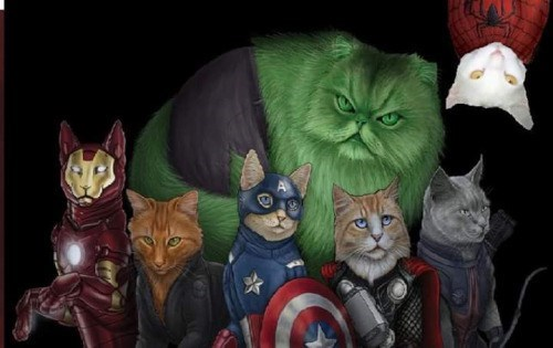 avengers cats If Marvel Superheroes Were Cats