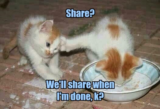 share milk kitten caption Cats funny - 8580373504