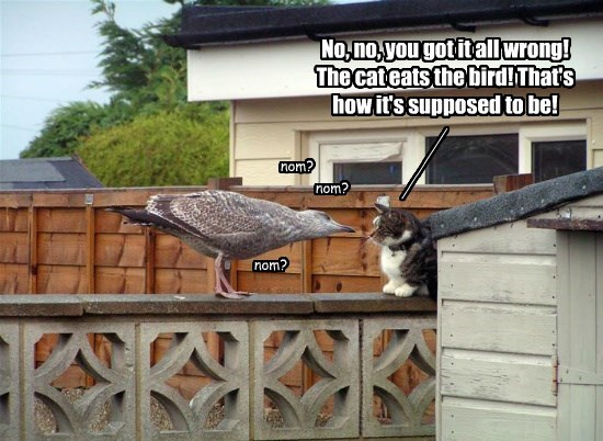 No, no, you got it all wrong! The cat eats the bird! That's how it's supposed to be!
