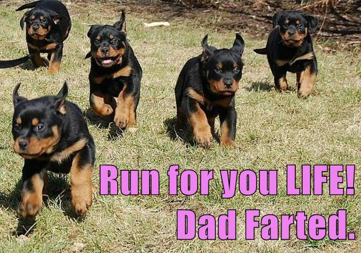 animals dogs run dad caption funny fart
