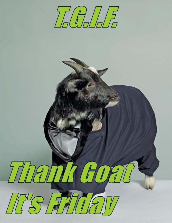 T.G.I.F.   Thank Goat It's Friday