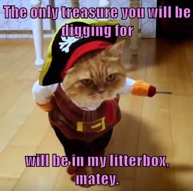 animals litterbox costume pirates caption Cats funny - 8580456960