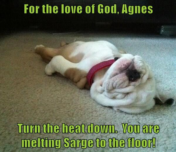 For the love of God, Agnes Turn the heat down. You are melting Sarge to the floor!