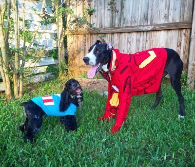 cute dogs superheroes Captain America: Civil Woof