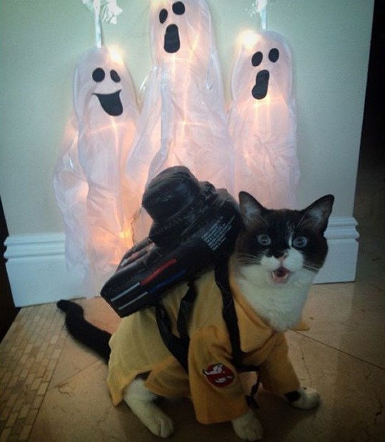 halloween cats costume I Ain't Afraid of No Ghosts!