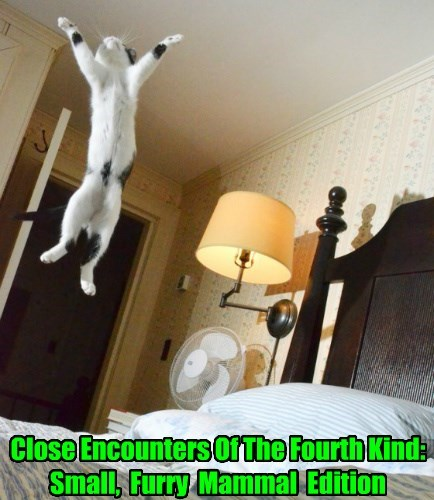 Close Encounters Of The Fourth Kind: Small,  Furry  Mammal  Edition