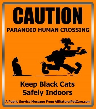 Keep your black cat safe this Halloween