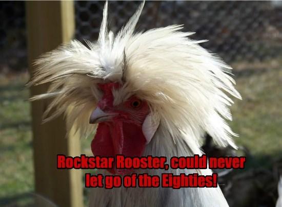 rooster birds rockstar funny big hair - 8580709888