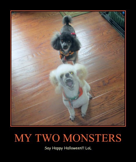 MY TWO MONSTERS