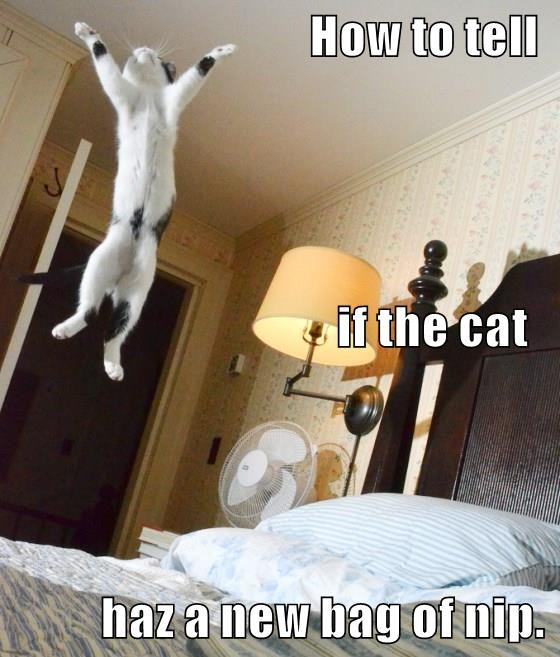 animals catnip high caption Cats funny - 8581131264