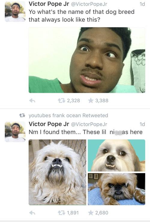 dogs,twitter