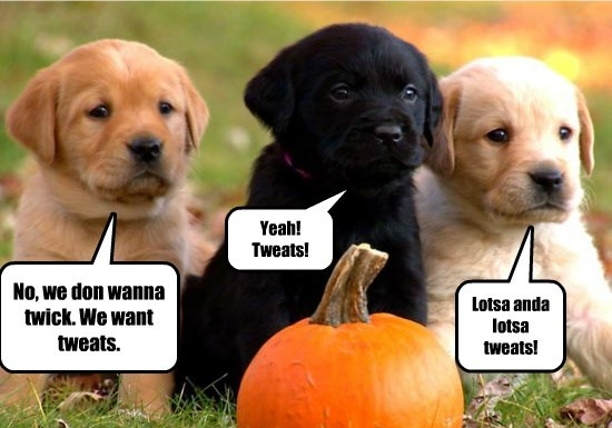 treats want puppies tricks dont caption - 8581316864