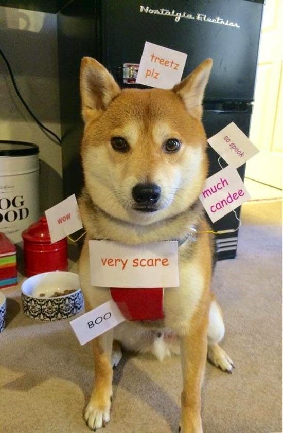 shibe dogs costume Wow. So Halloween