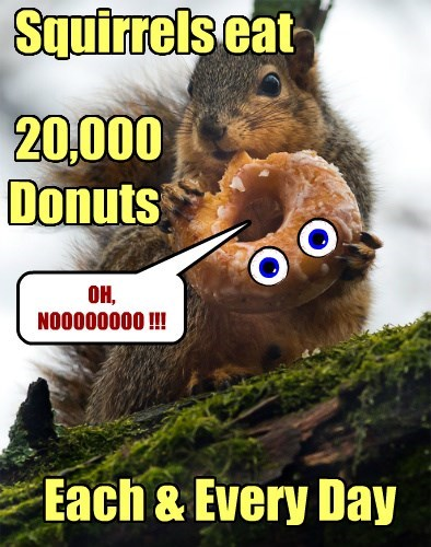 Squirrels: Natures Donut Killers